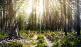 Forest. Ecology summer green Royalty Free Stock Images