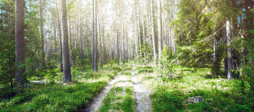 Forest. Ecology summer green Royalty Free Stock Photography