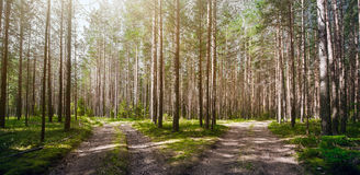 Forest. Ecology summer green Royalty Free Stock Photos