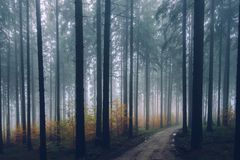 Forest, Ecosystem, Spruce Fir Forest, Atmosphere Royalty Free Stock Photos