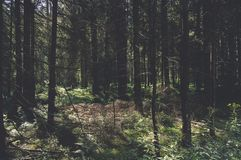 Forest, Ecosystem, Spruce Fir Forest, Nature Stock Photo