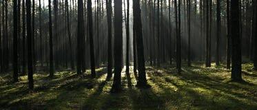 Forest, Ecosystem, Woodland, Spruce Fir Forest Stock Photos