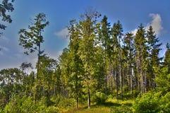 Forest Edge Image libre de droits