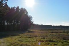 Forest Edge Arkivfoton