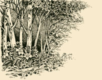 Forest edge drawing Royalty Free Stock Photography