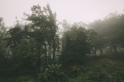 Forest edge on foggy day Stock Images