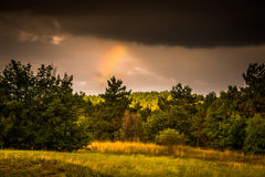 Forest Edge with Rainbow Stock Photos