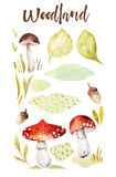 Forest elements witn mushrooms, branches, grassl for kindergarten, isolated illustration for children , pattern. Watercolor Hand drawn boho kids image Perfect Stock Photography