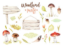 Forest elements witn mushrooms, branches, grassl for kindergarten, isolated illustration for children , pattern. Watercolor Hand drawn boho kids image Perfect Stock Photos