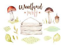 Forest elements witn mushrooms, branches, grassl for kindergarten, isolated illustration for children , pattern Stock Photography