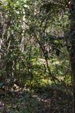 Elephant going away in Periyar National Park Forest. Forest elephant is going away!`. There are many wild Indian elephants living in Periyar National Park. This stock photos