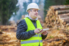 Forest engineer with tablet PC near piles of logs in forest Royalty Free Stock Photography
