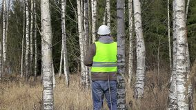 Forest engineer talking on cell phone in birch grove stock video footage
