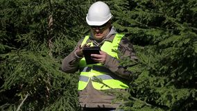 Forest engineer working with tablet PC near fir stock footage
