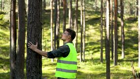 Forest engineering and management, renewable resources - forester inspecting quality of pine tree