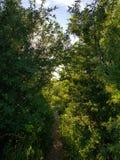 Forest Entrance immagini stock libere da diritti