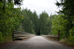 Forest entrance. An old bridge leads into the dark forest Stock Photography
