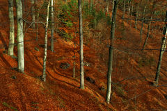 Forest environment. View of forest environment in fall term Stock Photography