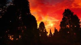 Forest With Epic Sunset sconosciuto Fotografia Stock