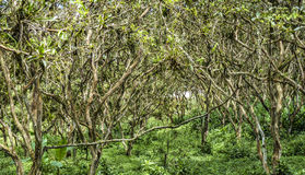 Forest in Equador Stock Photography