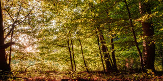 Forest in Europe in Late September. Royalty Free Stock Photo