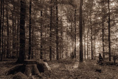 Forest in Europe in Late September. Royalty Free Stock Photos