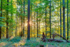 Forest in Europe in Late September. Stock Image