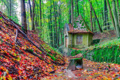 Forest in Europe in Late September. Royalty Free Stock Photography