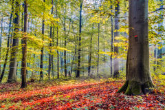Forest in Europe in Late September. Royalty Free Stock Images