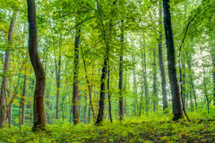 Forest in Europe in Late September Royalty Free Stock Photo