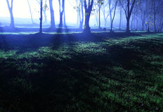 Forest at evening Royalty Free Stock Photo