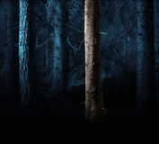 Forest in evening light Royalty Free Stock Photos