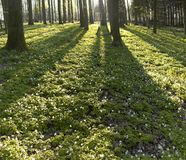Forest and evening light Stock Photography
