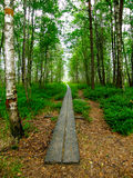 Forest exit. A pathway through the Store Mosse  Natural Reserve in Gnosjö, Sweden Stock Photography