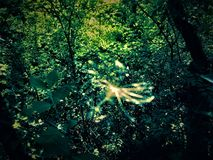 Forest Fairy. A forest fairy is flying among trees Royalty Free Stock Photography