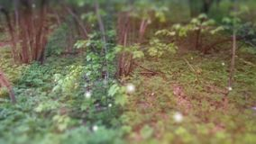 Forest Fairy Tale Scene Fireflies profondo 3D rende video d archivio