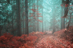 Forest fairytale road. Beautiful fairytale with mystical orange red forest path. Color filter effect used stock photo