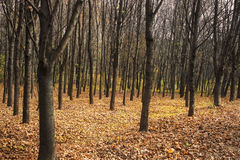 Forest in fall Royalty Free Stock Photo