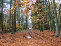 Forest in fall 127 Stock Photography
