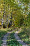 Forest in fall Royalty Free Stock Image