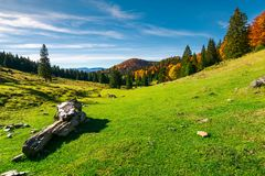 Forest in fall colors on the hill. Beautiful morning in mountains. mixed forest in fall colors on the hill. log on a grassy meadow Stock Photo
