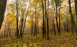 Forest in fall colors Stock Photography