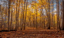 The forest in the fall. Hiking trail in the forest in the fall Stock Images