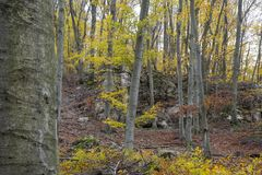 Forest in fall in red and yellow colors. Autumn concept. Stock Image
