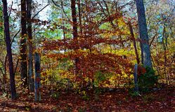 Forest in the Fall Royalty Free Stock Photos