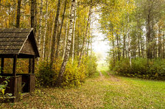 Forest in the fall Stock Photos
