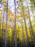 Forest in fall season Royalty Free Stock Photo