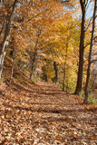 Forest in the Fall Royalty Free Stock Photography