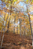 Forest in the Fall Stock Image