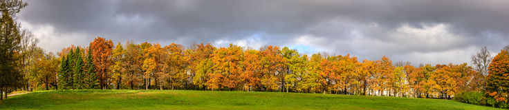 Forest in fall at St Petersburg Royalty Free Stock Photography